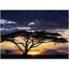 Coucher de soleil, Parc National d'Amboseli, Kenya, Joff LEE, affiche 50x70 cm