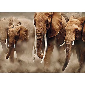 Eléphants, Parc National d'Amboseli, Kenya, Martin HARVEY, affiche 50x70 cm