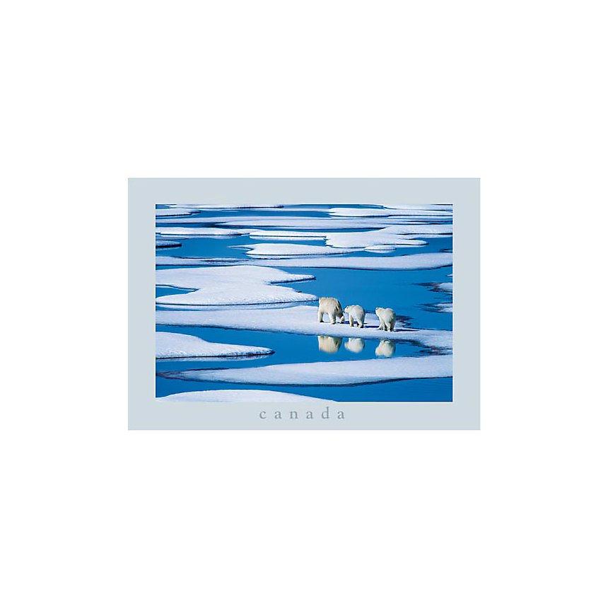 """Famille d'ours polaires, Dr Hinrich Bà""""SEMANN, affiche 50x70 cm"""