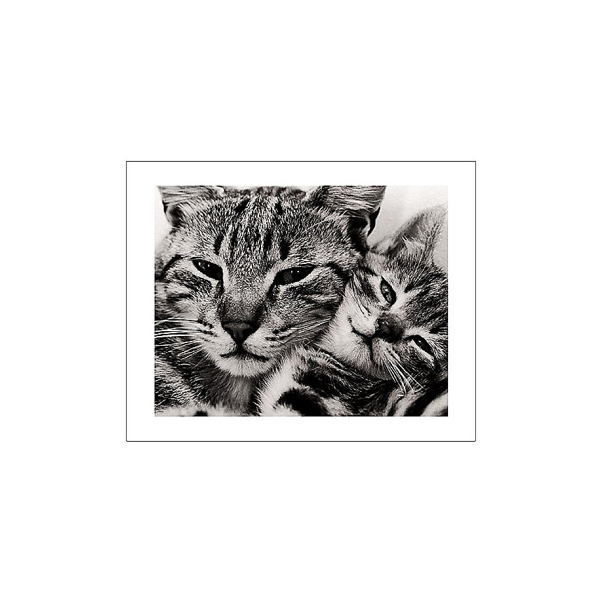 Chat et chaton, David Mc ENERY, affiche 40x50 cm