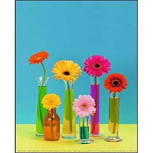 Fleurs pop, Camille SOULAYROL, Frédéric BARON-MORIN, affiche 24x30 cm