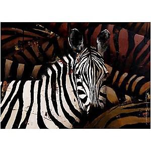 Zèbres, MARIANNEJULIE, affiche 50x70 cm