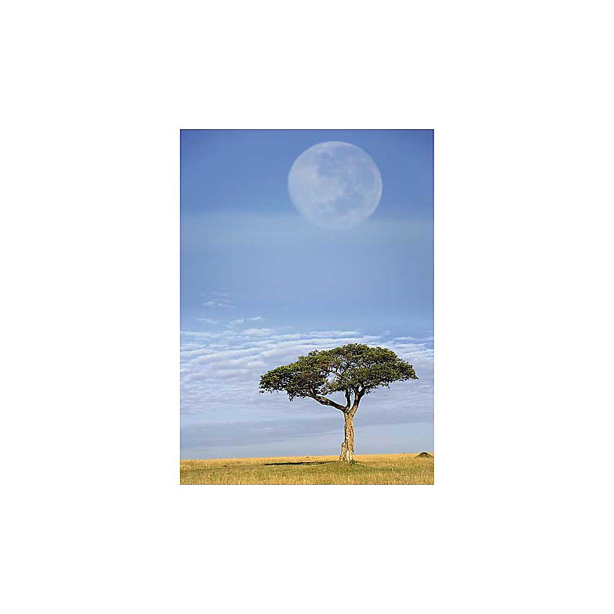 Pleine lune, Masai Mara, Kenya, Adam JONES, affiche 50x70 cm