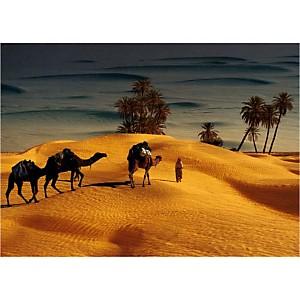 Palmeraie dans le Sud tunisien, Robert PUTINIER, affiche 50x70 cm