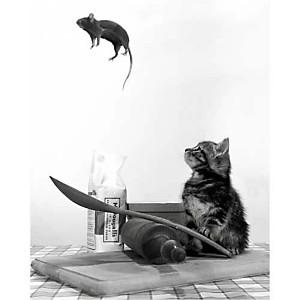 Le chat et la souris, REX INTERSTOCK, affiche 24x30 cm