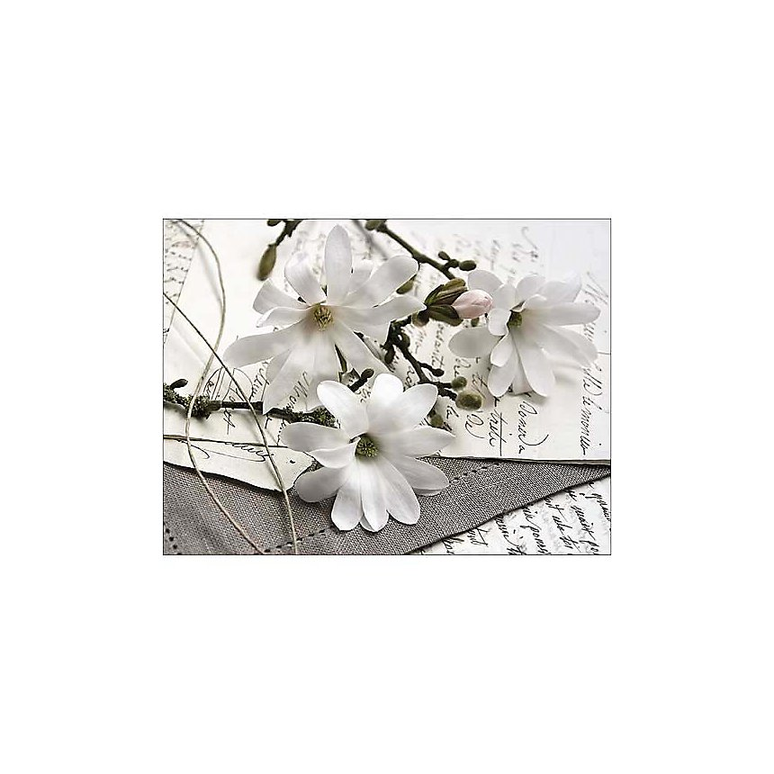 Magnolias et lettres, Catherine BEYLER, affiche 30x40 cm