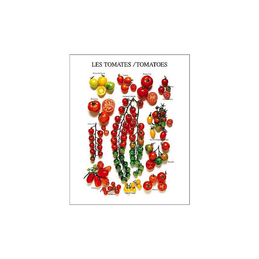 Les tomates, Roger PHILLIPS, affiche 24x30 cm