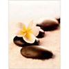 Fleur et pierres, Anonyme, affiche 30x40 cm