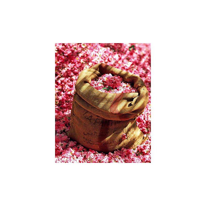 Pétales de roses, Bruno MAZODIER, affiche 40x50 cm