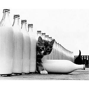 Le paradis des chats, KEYSTONE, affiche 24x30 cm
