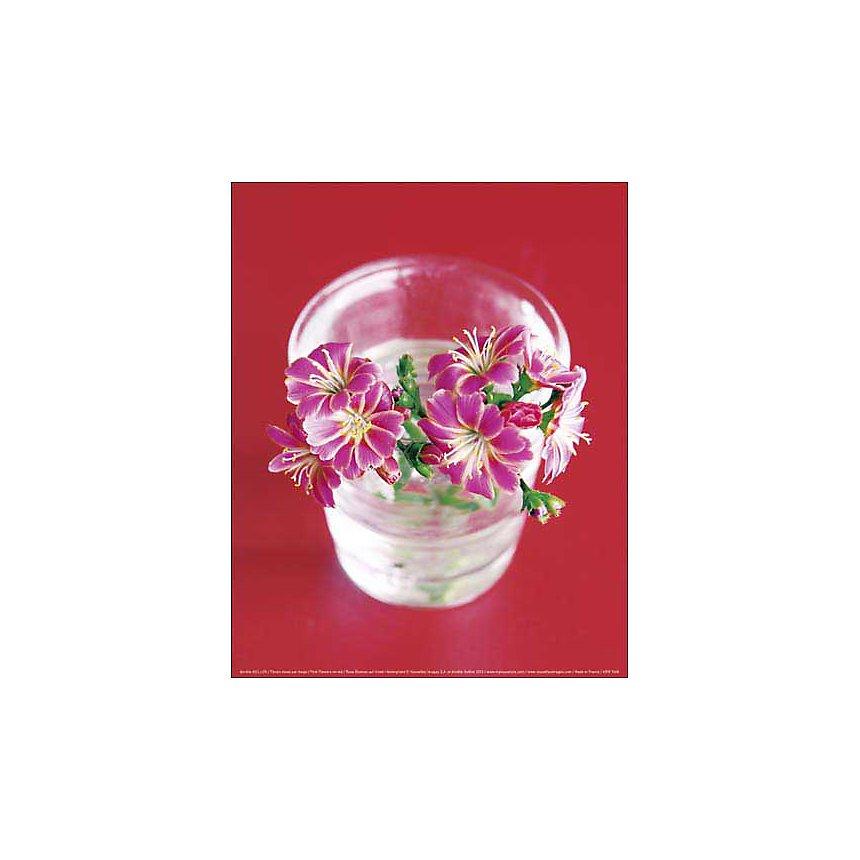 Fleurs roses sur rouge, Amélie VUILLON, affiche 24x30 cm