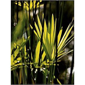 Feuillage vert, François GOUDIER, affiche 30x40 cm