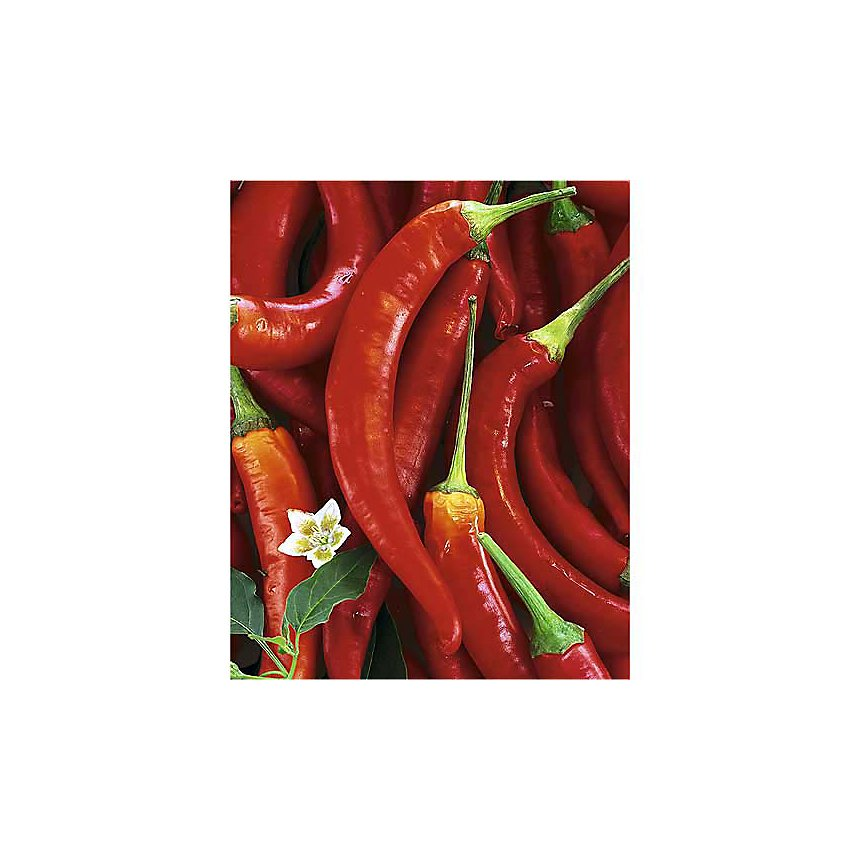 Piments rouges, Michael ROSENFELD, affiche 24x30 cm