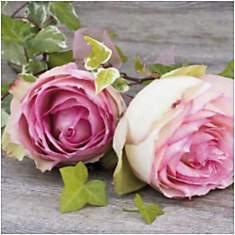 Roses, Catherine BEYLER, affiche 30x30 c...