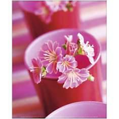Fleurs roses, Amélie VUILLON, affiche 24...