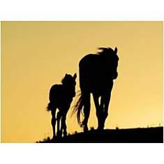 Deux Mustangs, Jean-Louis KLEIN, Marie-L...