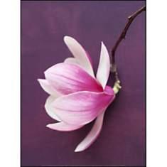 Magnolia, Amélie VUILLON, affiche 30x40 ...