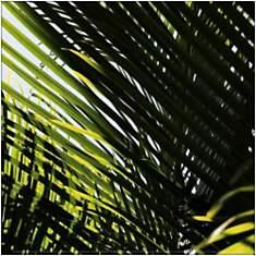 Palmiers, République dominicaine, Punta ...