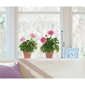 Sticker fenêtres Géraniums roses (ATELIER )