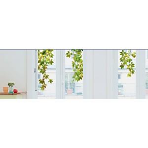 Sticker fenêtres Vigne vierge