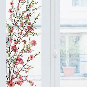 Sticker fenêtres Pommier du Japon