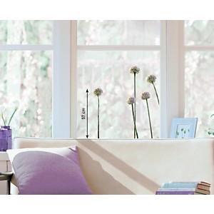 Sticker fenêtres Fleurs d'ail rose