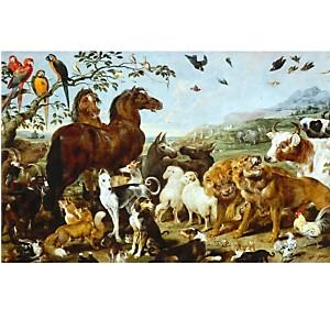 L'entrée des animaux