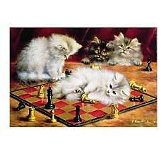 Les chats à l'échiquier