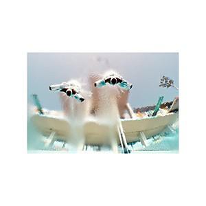 Tirage Photo championnats du monde aquat