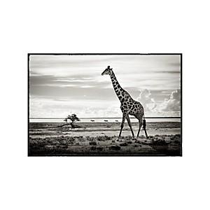 Tirage Photo girafe Namibie