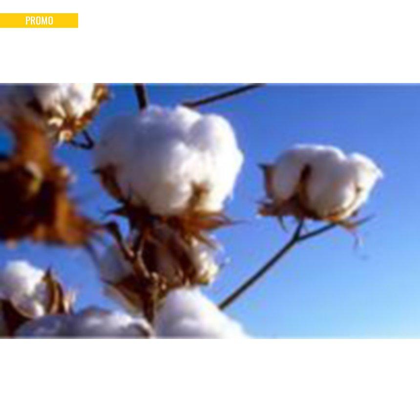 Couette Bio coton biologique, légère
