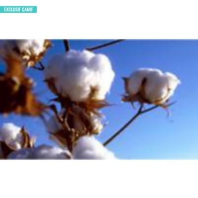 Couette Bio coton biologique, tempérée